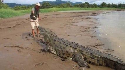 Inconscient du danger : Il réanime un couple de crocodiles !