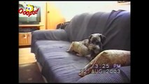 Funny Animals - Funny Dogs _ Cats - Animal Attacks