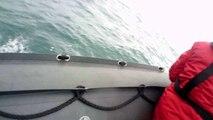 Des dauphins au large d'Arcachon