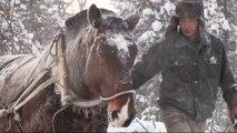 debardage au cheval en chine, en 2014, à Xuexiang