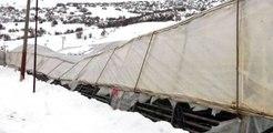 Yoğun Kar Yağışı Seraları Yıktı