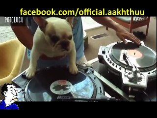 PEOPLIVE! Dog being a DJ its GREAT.