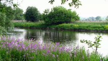 Grand River Summer Wildflower Trail, Cambridge Canada