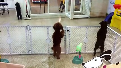 Dog With Disco Dancing Very Funny Video