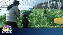 China's Growth in Organic Farms | Inside China | CNBC International