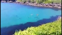 Huge Shark Swims Among Bathers