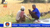Khmer News, Hang Meas HDTV News This Morning on  08 January 2014 Part 01