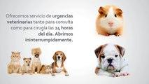 Clínica veterinaria Ciudad de los Ángeles - Urgencias veterinarias Móstoles - Centro veterinario Villaverde