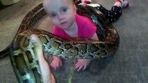 Un père de famille filme sa fille de 14 mois qui joue avec un python de 4 mètres !