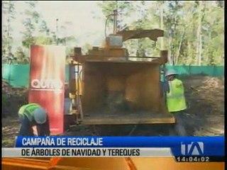Se desarrolla campaña de reciclaje de árboles de navidad naturales