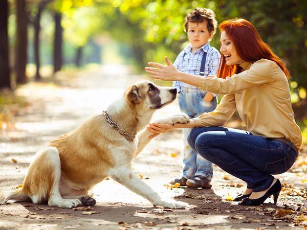 Dog Behaviour Training Sydney | Dog Problems Sydney | Dog Training Sydney
