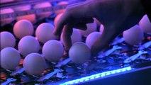 1600 balles de ping-pong posées sur 1600 pièges à souris : réaction en chaîne énorme par Pepsi max!