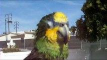 Parrot Taking Bath And Speaking Human & Animals Languages
