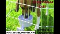 köpek su kabı fiyatları,köpek su kabı fiyatı,KÖPEK MAMA KABI,KÖPEK MAMA KAPLARI,KÖPEK SU KABI,KÖPEK SU KAPLARI,KÖPEK MAMA SU KAPLARI,KÖPEK MAMA SU KABI