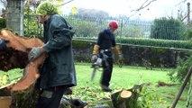 Arbres & Co à Estialescq - Abattage, élagage, entretien  et soin des arbres.