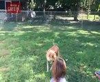 Le visage de ce chien qui se rend compte qu'il va percuter cette enfant est un vrai bijou !