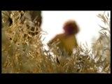 """Charal - viande de boeuf - septembre 2009 - """"Les carnivores"""", """"La mère lionne"""""""