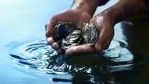 "Comité National de la Conchyliculture - huîtres, ""Les huîtres naturellement inimitables"" - octobre 2012"