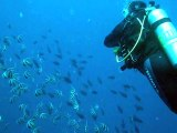 Nage avec les poissons cochers,maldives  coco palm 2010