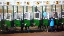 Un cheval de course avec des œillères panique et court droit devant lui
