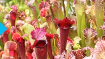 Plants Versus Ants: Voracious Vegetation is Victorious
