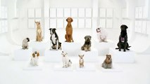 "Volkswagen - voiture, ""The Bark Side (Chorale de chiens), http://vw.com/star-wars-invite"" - janvier 2012 - teaser"