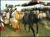 Sultan ul Faqr Hazrat Sakhi Sultan Muhammad Asghar Ali Sahib (R.A) (M H Sultania Awan Horse Club of Hazrat Sakhi Sultan Bahoo R.A) (2)
