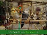 Papağanlar Hakkında Herşey