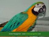 Sultan Papağanları Hakkında Herşey