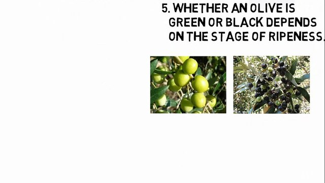 Ten Weird Facts About Olive Trees