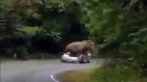 Elefante aplasta el coche de unos turistas