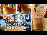 Purchase Bulk Feed Wheat for Export, Feed Wheat Exporting, Feed Wheat Exporters, Feed Wheat Exporter, Feed Wheat Exports, Feed Wheat Grade 1, Feed Wheat Grade 2, Feed Wheat Grade 3