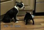 Animali - Cane sta su due zampe e cade dentro la ciotola del cibo.