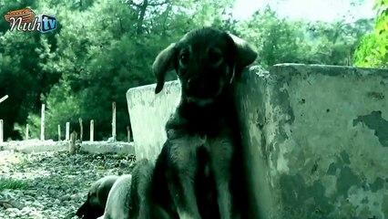 Evcil Dostlarımıza Dikkat Edelim Sevelim, Sevdirelim, Sevindirelim