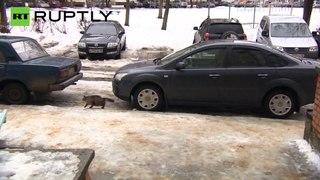 Um gato salva um bébé abandonado na Rússia