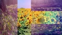 TranSlice: Hinge -  Split Screen Transition - Pixel Film Studios