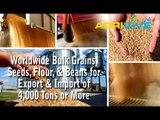 Acquire Bulk Sesame Seeds for Importing, Sesame Seeds Importers, Sesame Seeds Importer, Sesame Seeds Imports, Import, Import