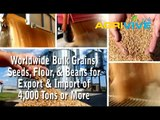 Bulk Sesame Seeds Mill, Sesame Seeds Milling, Sesame Seeds Mill, Bulk Sesame Seeds, Sesame Seeds Mill, Sesame Seeds Milling, Sesame Seeds