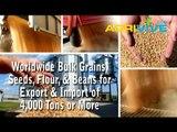 Bulk Sesame Seeds Dealer, Sesame Seeds Import, Bulk Sesame Seeds Meal, Bulk Sesame Seeds, Bulk Sesame Seeds Seed, Sesame Seeds