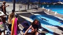 Lion de mer dans une piscine municipale