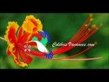 Colibris Vacances-Valentins-383