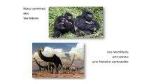 La malédiction des espèces longévives (Pour que nature vive : la biodiversité 6/11)
