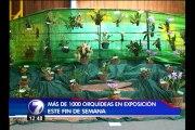 Este viernes inauguran feria de orquídeas en Cartago