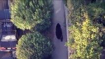 Un gars qui textote ne voit pas qu'il marche près d'un ours! Flippant...