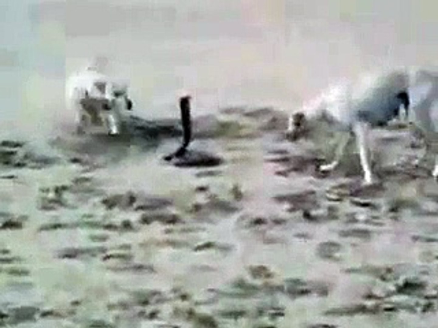 Dunya News-Dogs and Snake Fight .. Snake Killed by Dogs at last