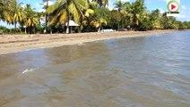 Guadeloupe - Les Antilles apres la Route du Rhum - Bretagne Télé Caraïbes