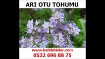 arı otu fiyatı,arı otu faydaları,arı otu hasadı,arı otu tohumu İstanbul,arı otu satışı izmir