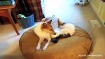 ★ NEW FUNNY CATS STEALING DOG BEDS GATTI CHE RUBANO IL LETTO AL CANE CAT VS DOG GATTI CO # 2014 ★