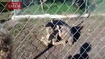 un petit garçon est choqué par un accouplement de tortue au zoo
