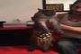 danse orientale de chat MDr